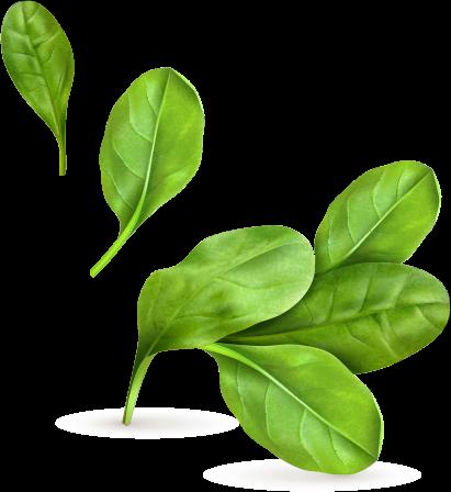 hero leaf hero leaf